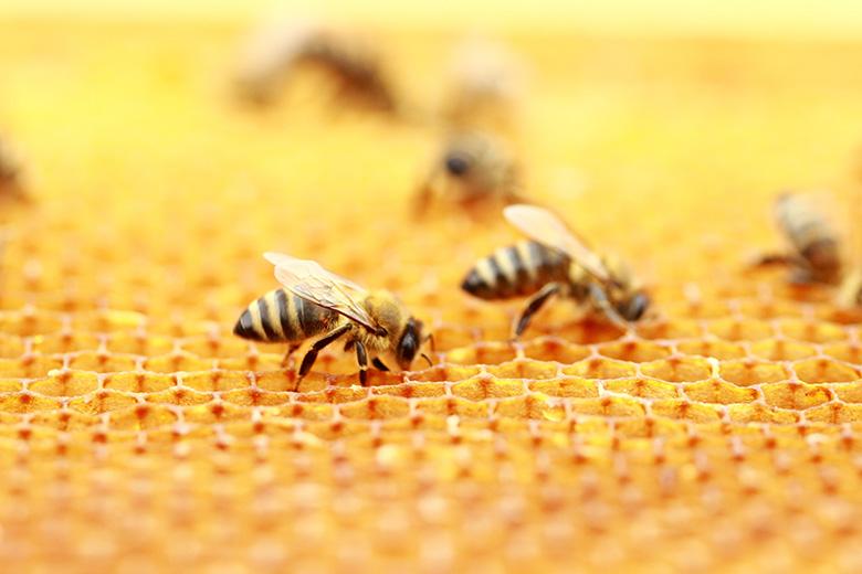 栄養素豊富なマヌカ蜂蜜