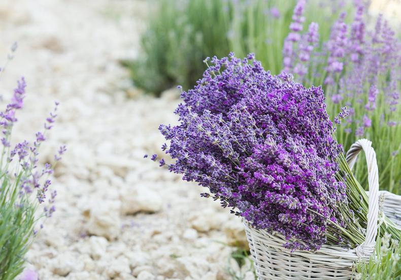 ラベンダーのお花
