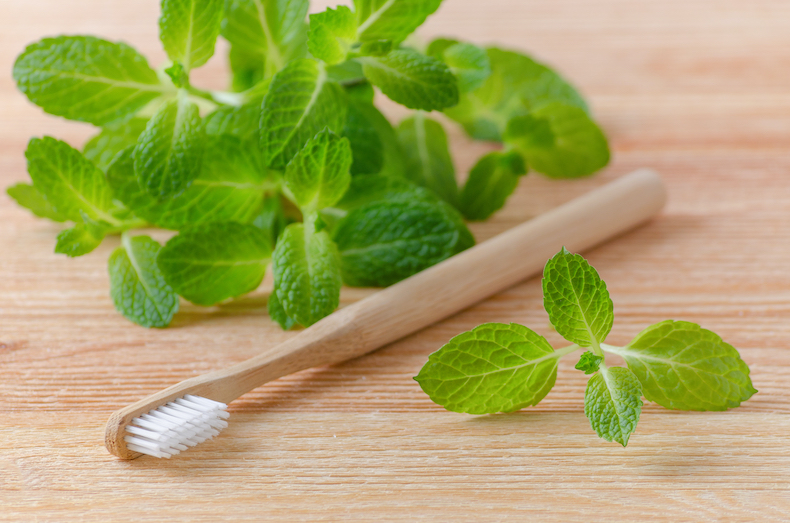 Tooth brush and peppermint