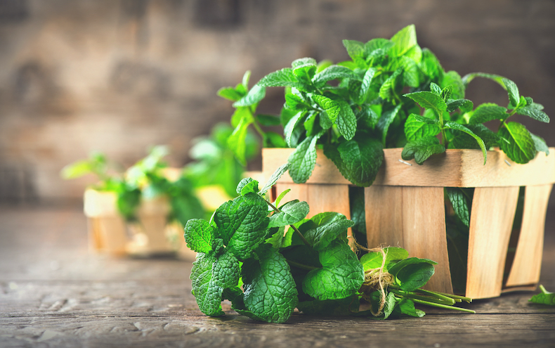 Mint leaf on the wooden table